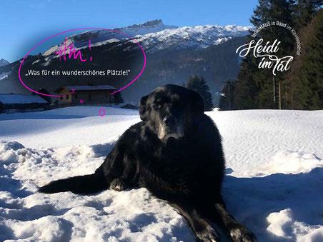 Ferienhaus in Baad im Kleinwalsertal, Mittelberg, Ferienwohnung für 2 bis 6 Personen, Heidi im Tal, Hunde sind willkommen!