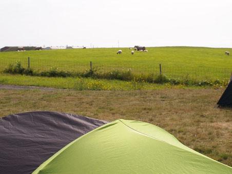 隣は牧場。