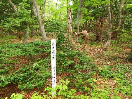 「奇木 鶴の木」 ただ途中で折れた木の様にも見えるけど・・