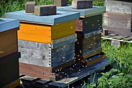 Auf die Biene kam Bärbel Bröskamp durch die Imkerleidenschaft ihrer Tochter. (Quelle: bernswaelz)