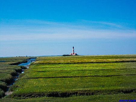 Weites Land an der Nordsee (Foto: Vanessa Schlenk)