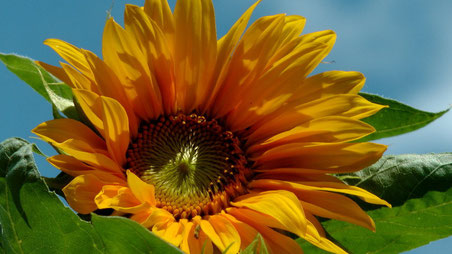 Endlich Sommer Blick in meinen Garten Anfang August 2014 © Copyright by Olaf Timm
