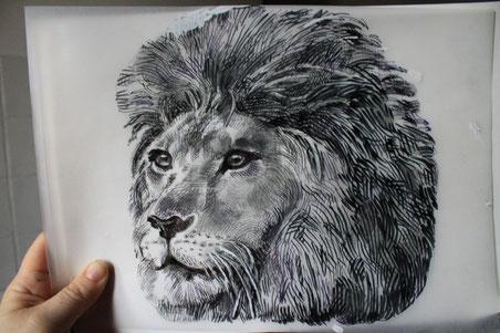 Testa di leone (tre quarti) - disegno a penna e sfumato a matita
