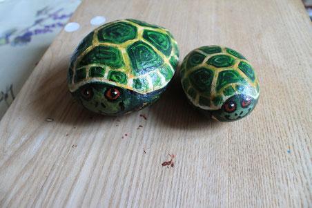 Sassi tartarughe
