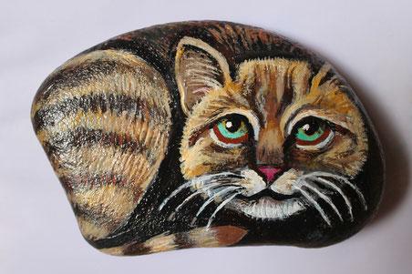 Sasso gattino (tigrato)