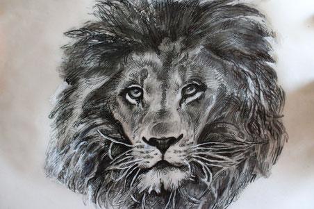 Testa di leone (frontale) - disegno a penna e sfumato a matita