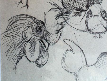 Galline e testa di gallo, schizzo veloce a penna. 1985