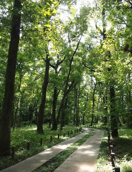 9月19日(2014) 雑木林の道:神代植物公園で9月18日に撮影
