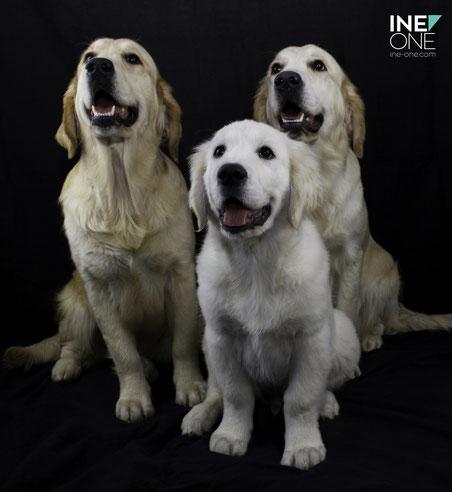 Lychee, Leeloo et Merlin, 3 enfants de notre Dual Champion Blue Dream
