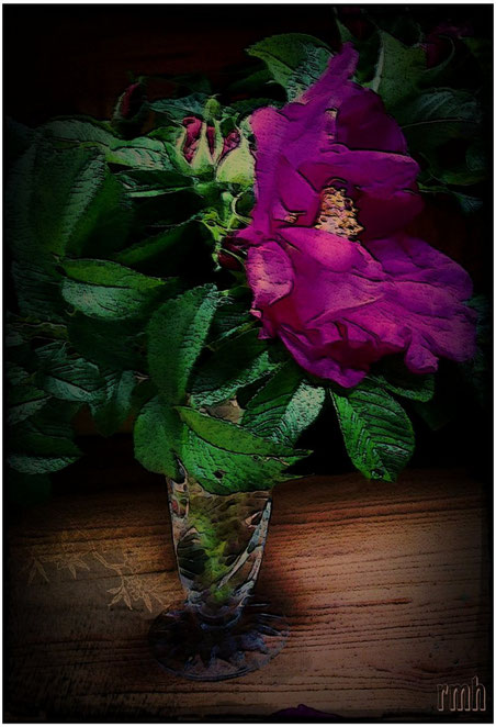 purple wild roses