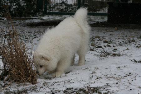 Selbst im Schnee gab es so viel zu entdecken