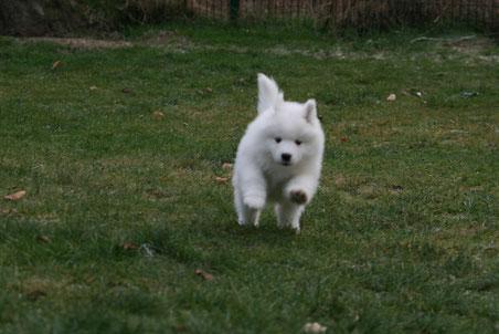 Hopp, hopp, hopp, Hundchen lauf Galopp