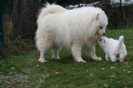 Großer Bär und kleiner Bär
