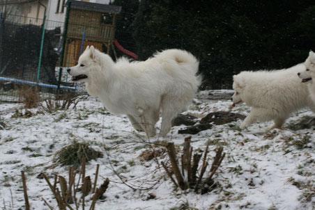 Auch sie nahm die Pfoten in die Hand und tobte durch den Schnee