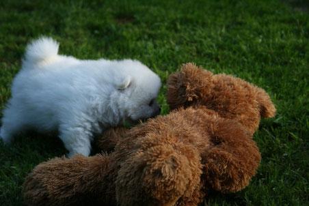 17.09.2014 - mit Teddy