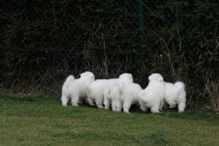 Die kleinen Zaungäste werfen einen Blick in Nachbarsgarten