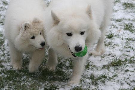 Angel (links) und Snezhinka beim Spiel mit dem Ball