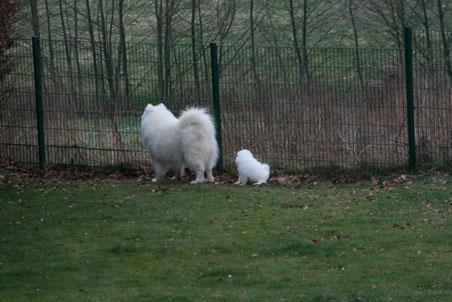 Gemeinsam lassen die Zwei ihren Blick über das weite Feld schweifen ... wie der Vater, so der Nachwuchs