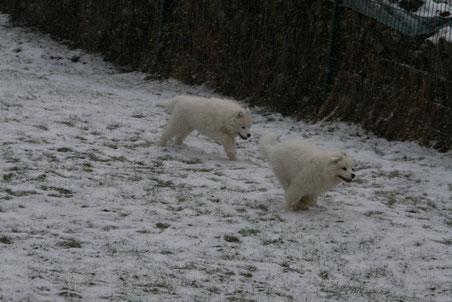 Zwei Schneefrösche