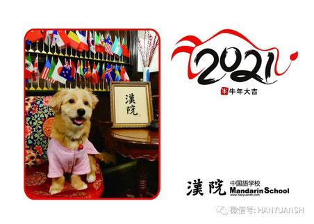 来年のカレンダーのモデルは、漢院の新しい仲間 布丁チャン(8カ月、女の子)