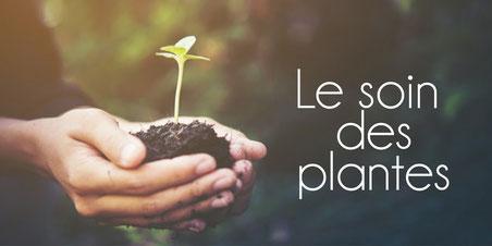 soin des plantes