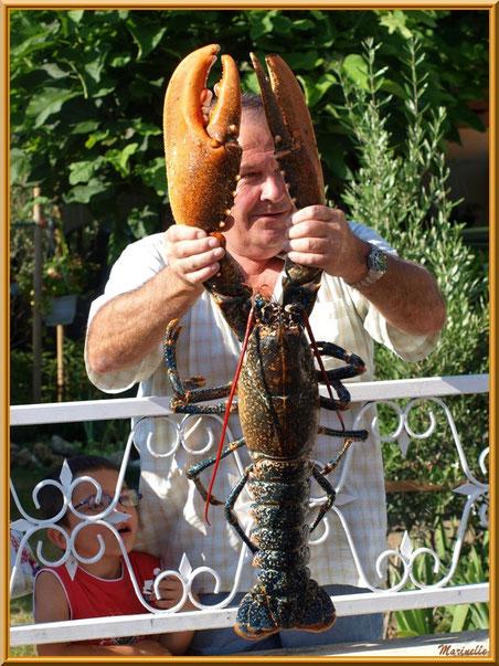 Un homard de 6 kg... qui dit mieux ?
