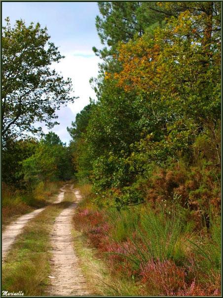 Chemin forestier aux couleurs début automne, forêt sur le Bassin d'Arcachon (33)