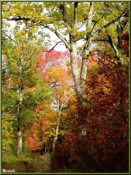 Chênes et sous-bois en période automnale, forêt sur le Bassin d'Arcachon (33)