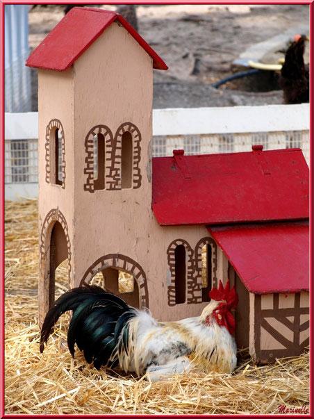 """Le """"Coq du Village"""", Parc de la Coccinelle, mini-ferme à Gujan-Mestras, Bassin d'Arcachon (33)"""
