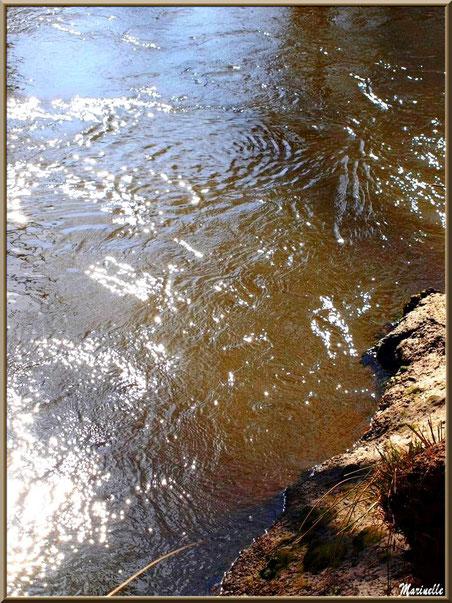 Reflets d'hiver en bordure de La Leyre, Sentier du Littoral au lieu-dit Lamothe, Le Teich, Bassin d'Arcachon (33)