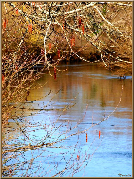 Un bras de la rivière La Leyre au détour du chemin, Sentier du Littoral secteur Pont Neuf, Le Teich, Bassin d'Arcachon (33)
