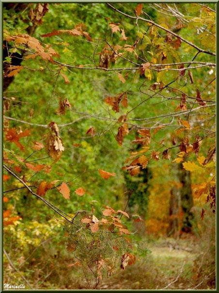 Forêt de chênes automnale et petite branche de bruyère, forêt sur le Bassin d'Arcachon (33)