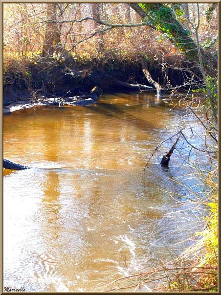 Végétation et reflets d'hiver en bordure de La Leyre, Sentier du Littoral au lieu-dit Lamothe, Le Teich, Bassin d'Arcachon (33)