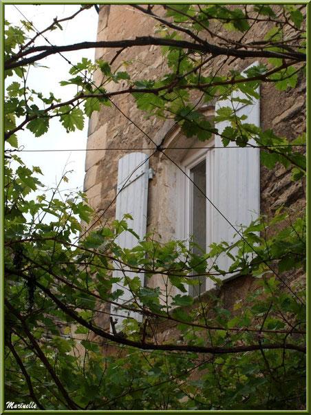 Fenêtre au travers d'une treille - Goult, Lubéron - Vaucluse (84)