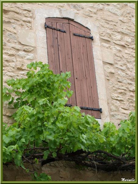 Fenêtre à la treille - Goult, Lubéron - Vaucluse (84)