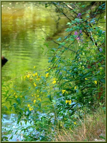 Méli-mélo floral et reflets en bordure de La Leyre, Sentier du Littoral au lieu-dit Lamothe, Le Teich, Bassin d'Arcachon (33)
