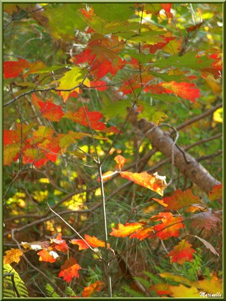 Méli mélo forestier : Branche de chêne automnal, aiguilles de pins et fougères, forêt sur le Bassin d'Arcachon (33)