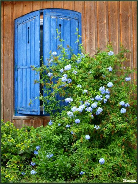 Fenêtre fleurie, Village de L'Herbe, Bassin d'Arcachon (33)