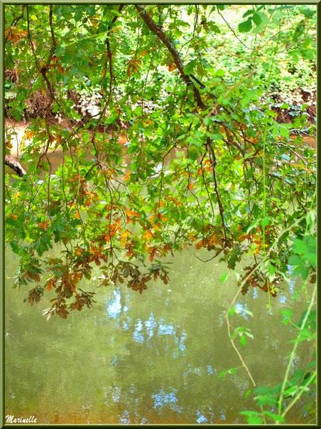 Branche de chêne, verdure et reflets en en bordure de La Leyre, Sentier du Littoral au lieu-dit Lamothe, Le Teich, Bassin d'Arcachon (33)