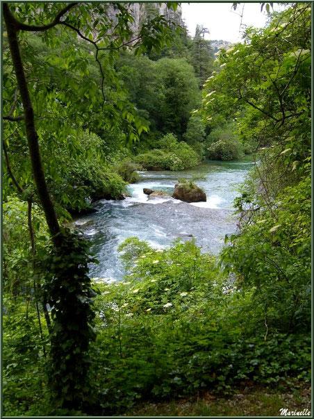 La Sorgue et ses reflets le long du chemin menant au gouffre et sa résurgence, Fontaine de Vaucluse, Pays de La Sorgue, Vaucluse (84)