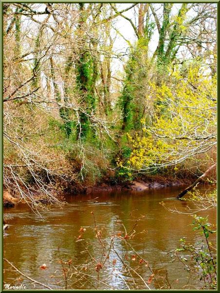 La Leyre, sa végétation bourgeonnante et ses reflets en début de printemps, Sentier du Littoral au lieu-dit Lamothe, Le Teich, Bassin d'Arcachon (33)