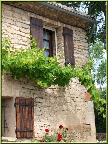 Façade à la treille - Goult, Lubéron - Vaucluse (84)