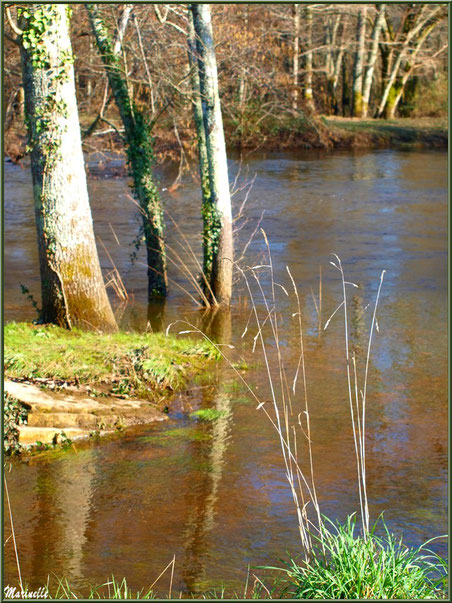 La Leyre et ses reflets en hiver, Sentier du Littoral au lieu-dit Lamothe, Le Teich, Bassin d'Arcachon