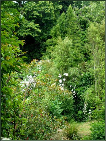 Le sentier de la Vallée du Bas - Les Jardins du Kerdalo à Trédarzec, Côtes d'Armor (22)