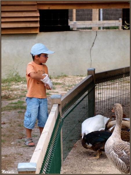 Donner à manger aux animaux, Parc de la Coccinelle, mini-ferme à Gujan-Mestras, Bassin d'Arcachon (33)