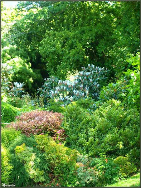Le Canal : magnolias et autre végétation luxuriante - Les Jardins du Kerdalo à Trédarzec, Côtes d'Armor (22)