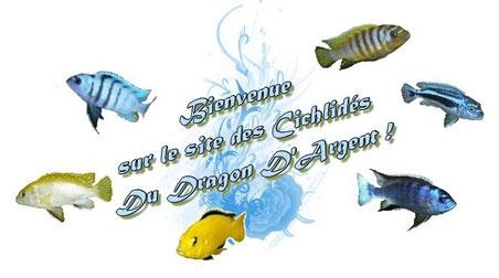 comment bien entretenir aquarium et ses cichlid 233 s africains du malawi aide les cichlid 233 s