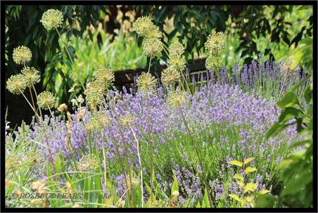 eine versteckte Bank am Lavendelbeet