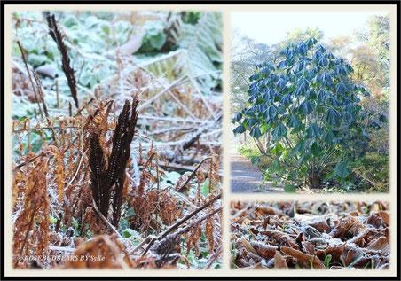 ein frostiger Morgen im Berggarten in Hannover-Herrenhausen