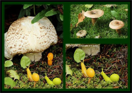 Pilze Schnecke